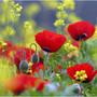 Аватар пользователя Лала Багирзаде