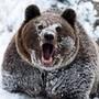 Аватар пользователя владимир юдин bear_77