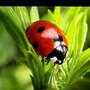 Аватар пользователя Нина Богатырева